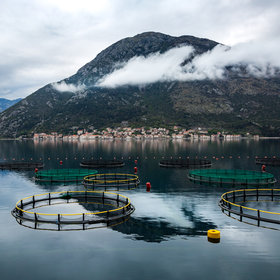 Food & Wine: Aquaculture Might be the Key to Saving Fish from Extinction