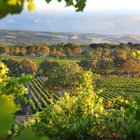 Food & Wine: The Best Wine Tours in South Australia