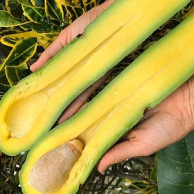 Food & Wine: What on Earth Is a Long Neck Avocado?