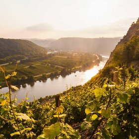 Food & Wine: Everyone Is Talking About Wines from Germany's Mosel River Valley