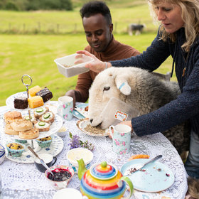Food & Wine: You Can Have Afternoon Tea With These Cute (but Naughty) Sheep in Scotland