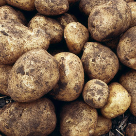 Food & Wine: North America's First Potatoes May Have Been Eaten 11,000 Years Ago