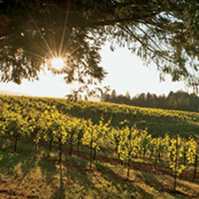 Food & Wine: Best California Wineries to Visit