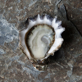 Food & Wine: 6 Sources for Super-Fresh Mail-Order Oysters