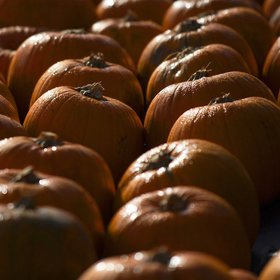Food & Wine: The Surprising Reason Americans Are Obsessed With Pumpkins