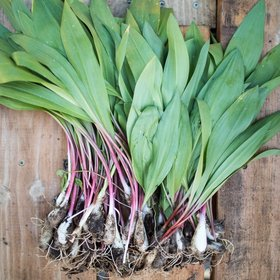 Food & Wine: 16 Chefs on Their Favorite Ways to Cook Ramps