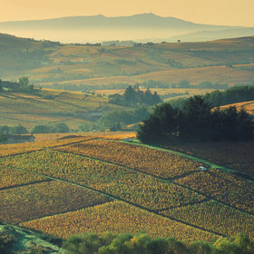 Food & Wine: France's Rhône Valley Is Having an Edgy Natural Wine Moment