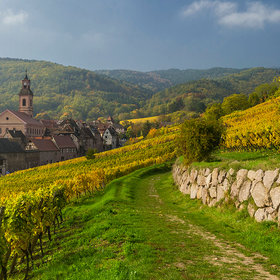 Food & Wine: 7 Wines That Are Making Alsace Cool Again
