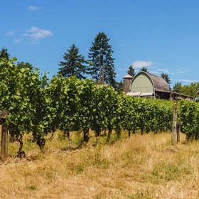 Food & Wine: You Can Sip on Your Favorite Wines While Doing Yoga at These Oregon Wineries