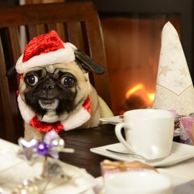 Food & Wine: London's Pug Cafe Is Hosting a Christmas Party for Pomeranians, Pugs, and Sausage Dogs