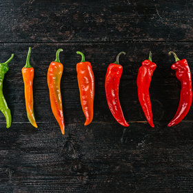 mkgalleryamp; Wine: What Is the Scoville Scale and How Does It Work?
