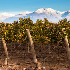Food & Wine: 13 Exciting Wines from Chile and Argentina to Buy Right Now