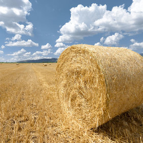 Food & Wine: American Wheat Farmers Are Having a Rough Summer