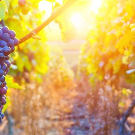 mkgalleryamp; Wine: What You'll Actually Get out of a Wine MBA