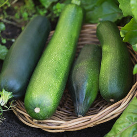Food & Wine: Happy National Sneak Some Zucchini Onto Your Neighbor's Porch Day!