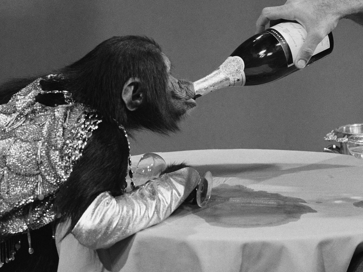 Drinking 3 Glasses of Champagne a Week Is Good for the Brain, Says Science