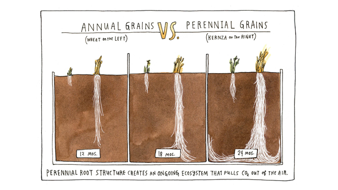 Food & Wine: The Perennial