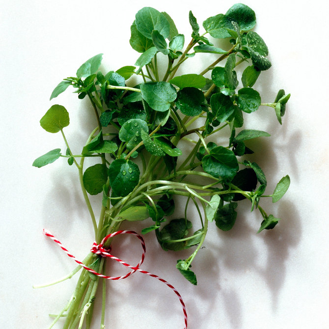 Food & Wine: Watercress Edible Weeds