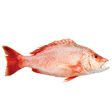 Food & Wine: snapper