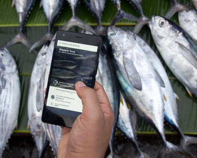 Fish fraud: Study finds 20 percent of seafood samples mislabeled worldwide