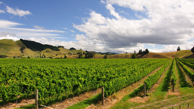 Food & Wine: Brightwater Vineyard, New Zealand