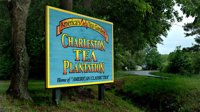 Food & Wine: Charleston Tea Plantation