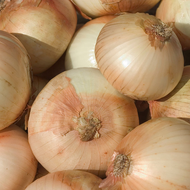 BATTLE FOR ONIONS
