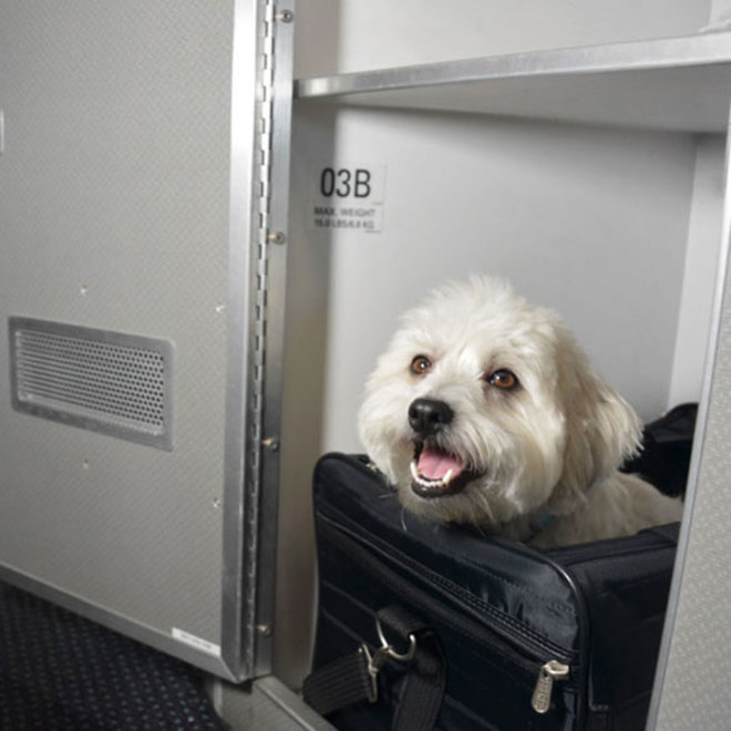FWX PARTNER TL TRAVELING WITH PETS