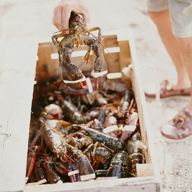 Food & Wine: Lobsters in a wooden crate.