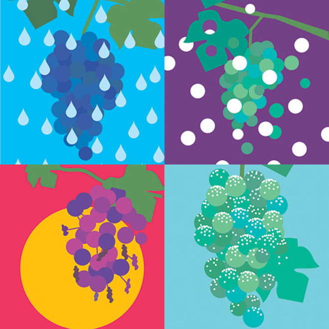 How Weather Can Make or Break a Wine Vintage