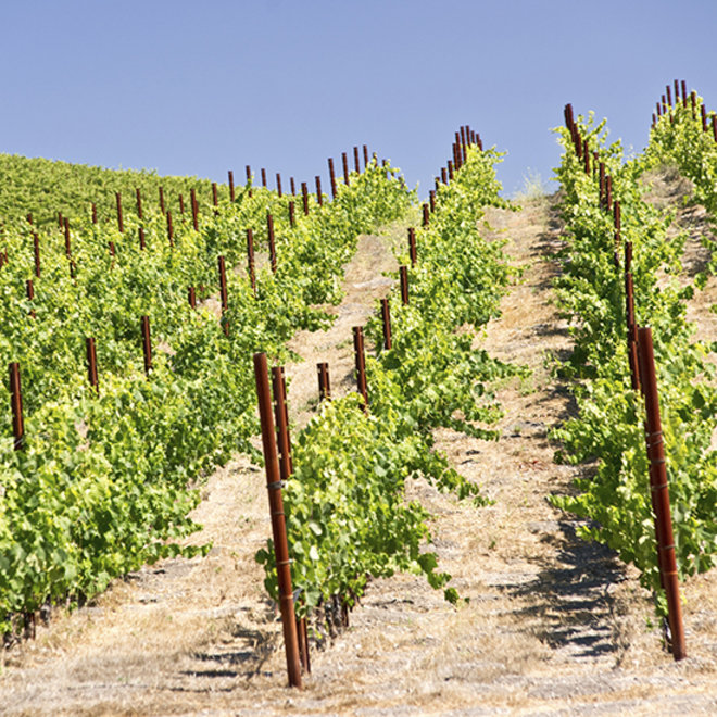Food & Wine: Why AVA is the Most Important Wine Acronym You Need to Know