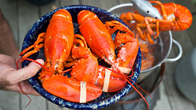 Food & Wine: Maine Lobsters Could Become Extinct