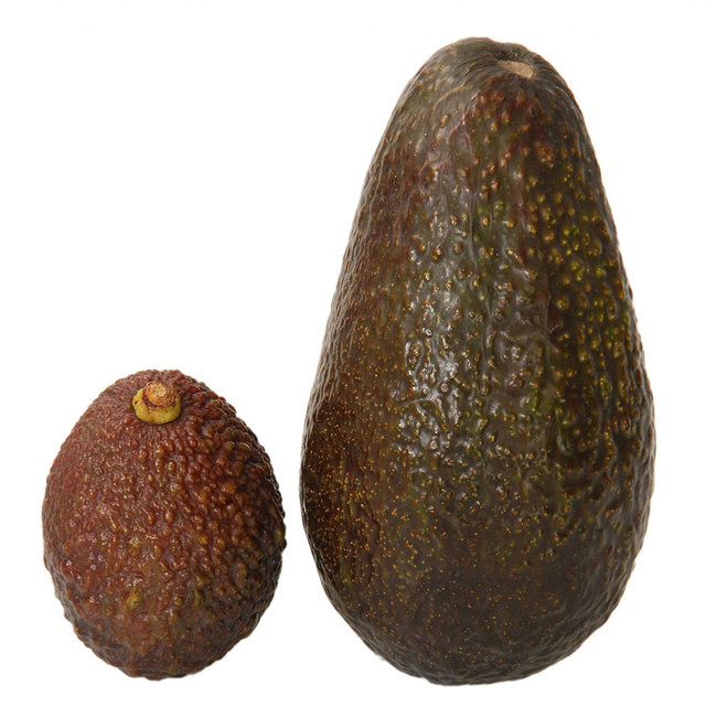 Marks and Spencer, avocado