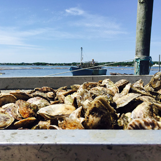 Food & Wine: Montauk Pearl oysters