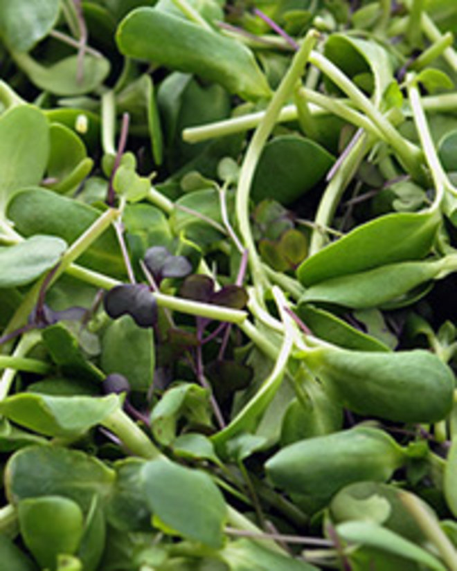 Food & Wine: Microgreens: Size Isn't Everything