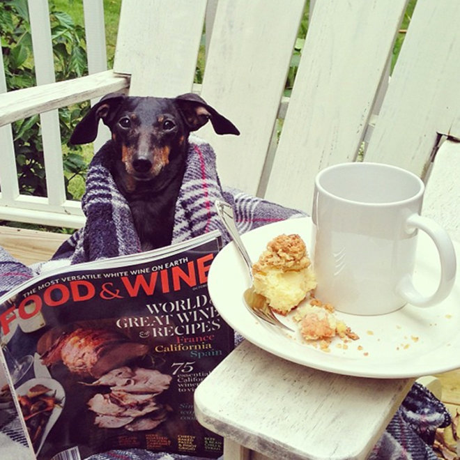 Submit Photos of Your #FWPets