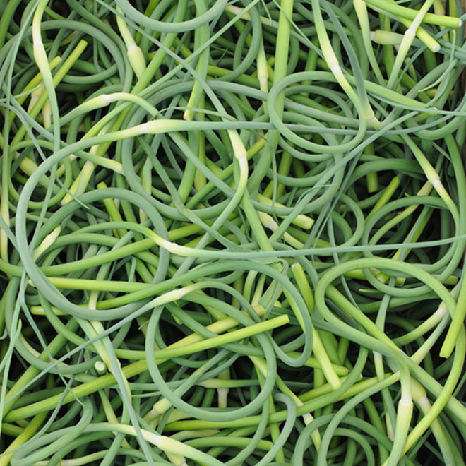 Food & Wine: Everything You Need to Know About Garlic Scapes