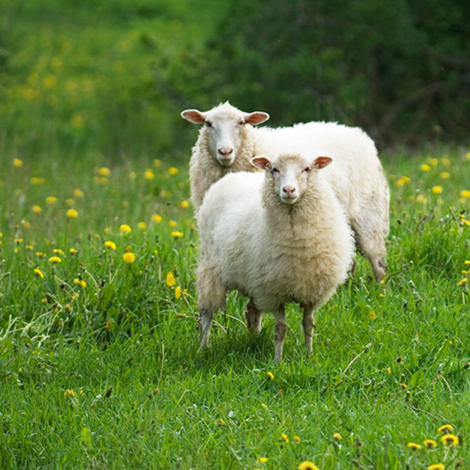 Food & Wine: Coming Soon to a Bar Near You: Smoked Sheep Dung Beer