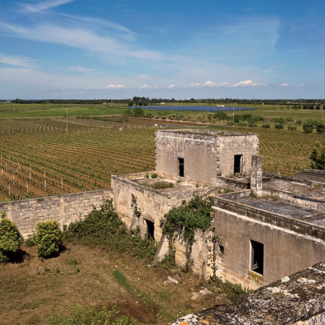 Food & Wine: A vineyard in Cantele.