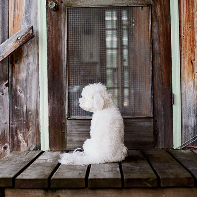 Food & Wine: Mabon, Judith Jones's Havanese pup.