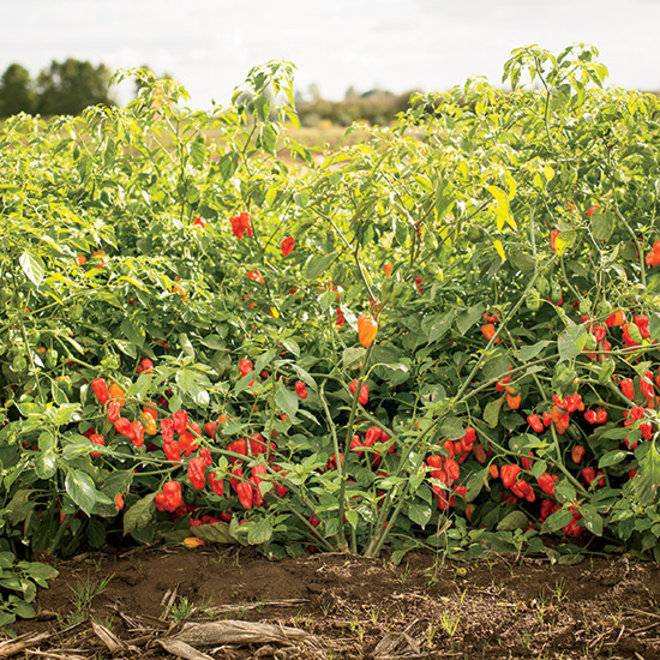 Food & Wine: What You Need to Know about Vegetable Cross-Breeding