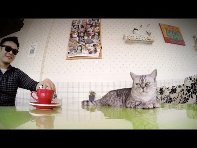 GoPro Provides First-Person Footage Inside a Shanghai Cat Cafe