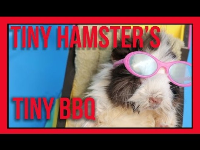 Watch a Tiny Hamster's Tiny 4th of July BBQ Celebration and Pool Party