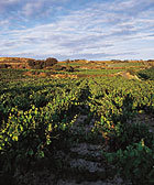 Food & Wine: Fact Sheet - Rioja
