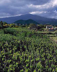 Food & Wine: Mt. Etna in Sicily is one of many newly revitalized wine regions around the world.