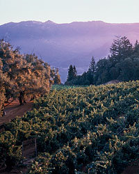 Food & Wine: Smith-Madrone makes intense Napa Cabernet from its mountain vineyards. Photo © Meg Smith.