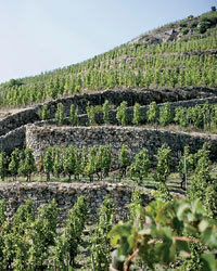 Food & Wine: Michel Chapoutier's terraced vineyards in Hermitage, France, produce savory, powerful Syrahs. Photo courtesy of Terlata Wines Int'l.