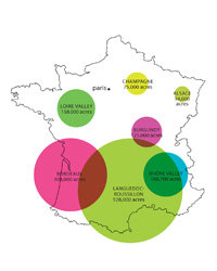 Food & Wine: French wine