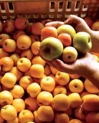 Food & Wine: The Hard Cider Buzz