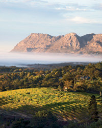 Food & Wine: South African wine